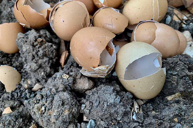 garden eggshells